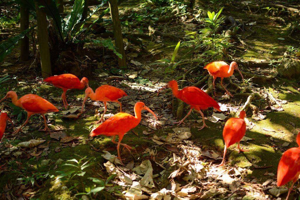 赤い鳥たち